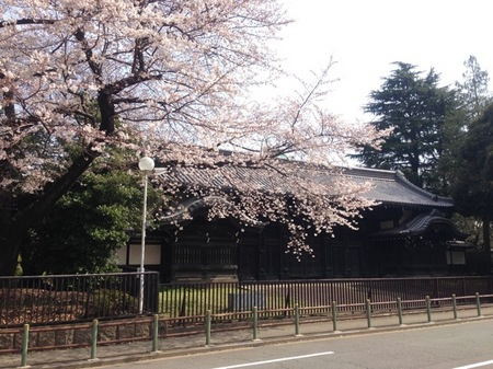 IMG_0927 上野公園.jpg